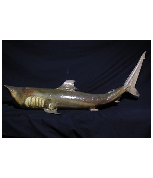 """29-34"""" SHARK"""