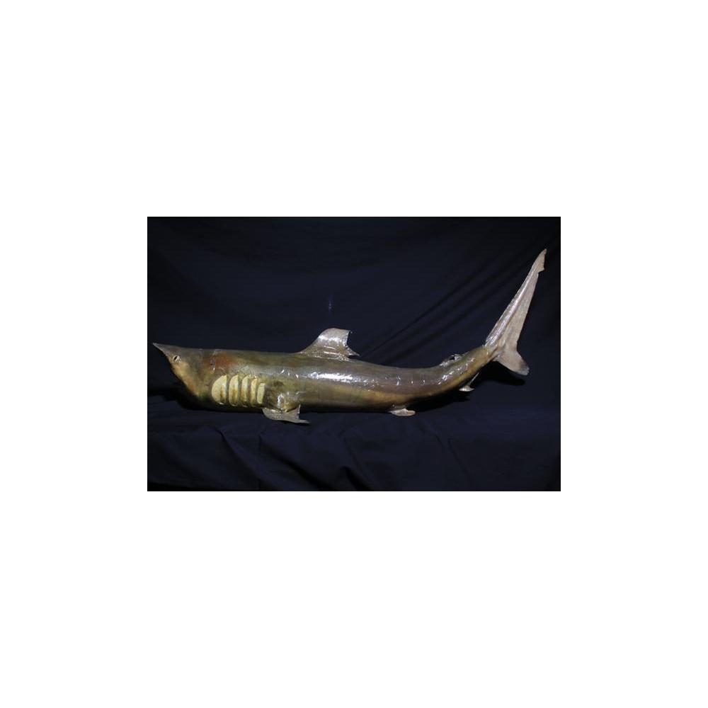"""34-39"""" SHARK"""