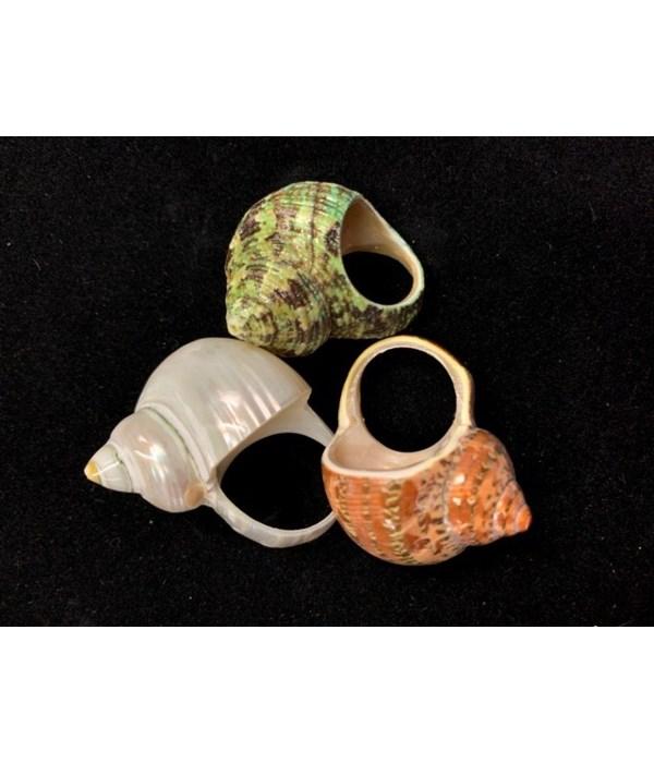 CANARIUM SHELL RING