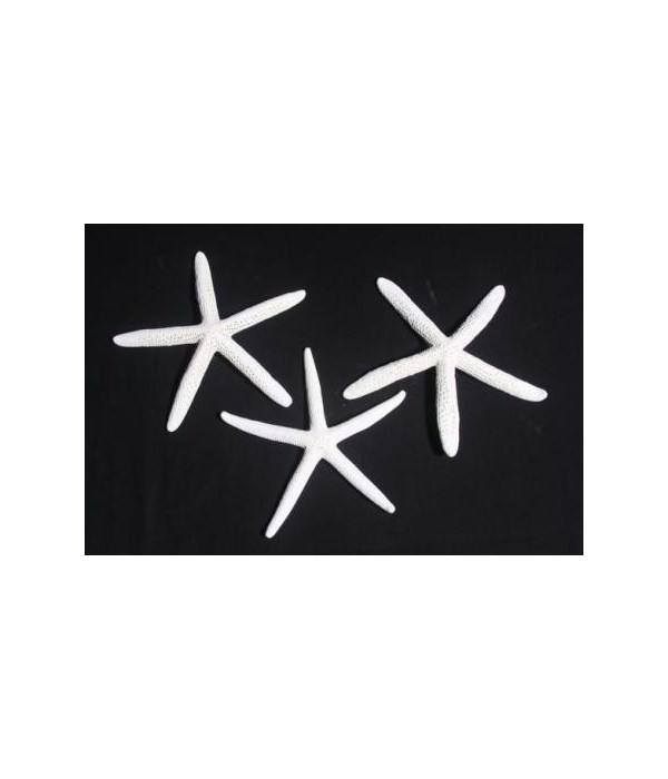 "3-4"" WHITE(BLUE STAR)"