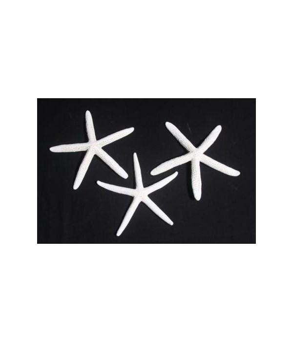 "8-10""  WHITE(BLUE STAR)"