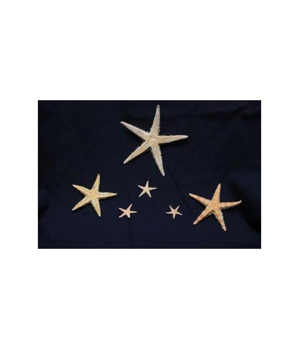 "2 1/2-3"" ORIENTAL STAR"