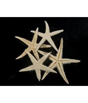 """3"""" WHITE ORIENTAL STAR"""