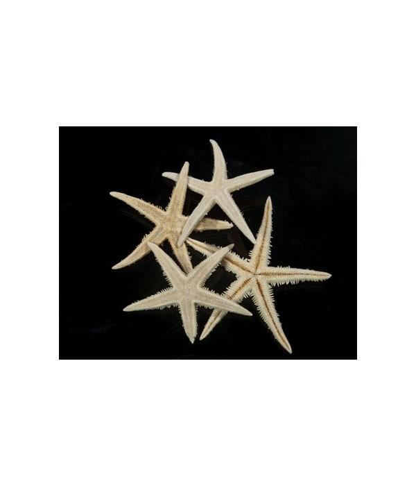 WHITE ORIENTAL STAR