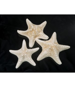 6-8 INCH MUD STAR WHITE