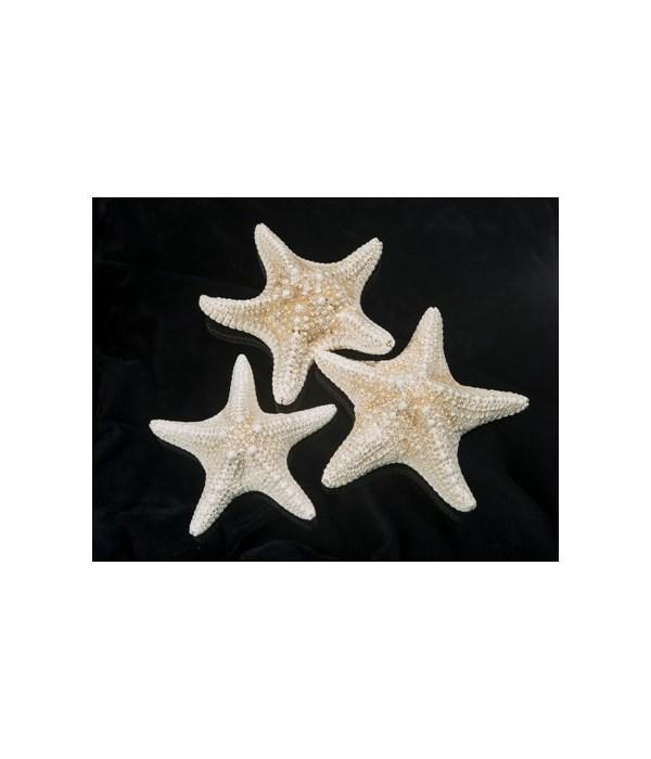 """6-8"""" MUD STAR WHITE"""