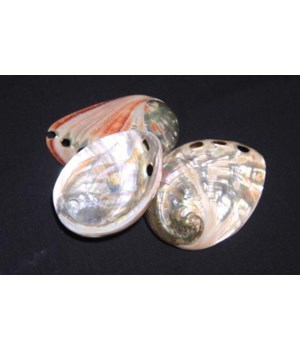 """ABALONE RED  2.5-3"""""""