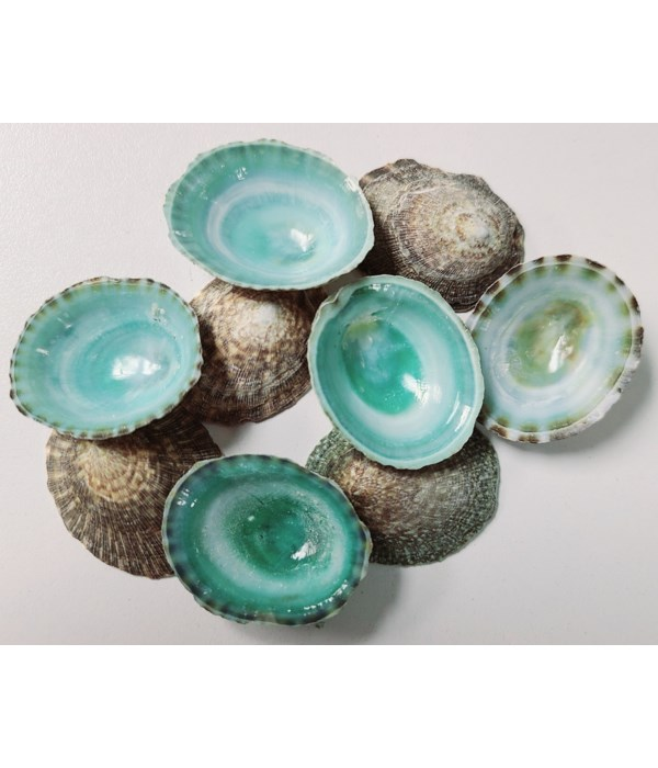 LIMPET GREEN
