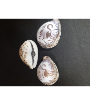 COWRIE MAGNET FLORIDA CARVED