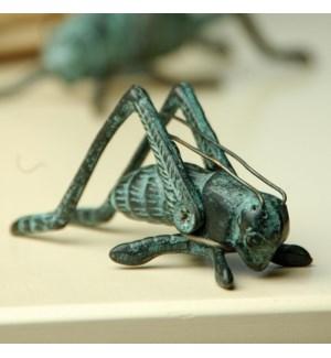 Small Cricket
