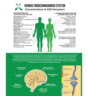 Endocannabinoid Poster