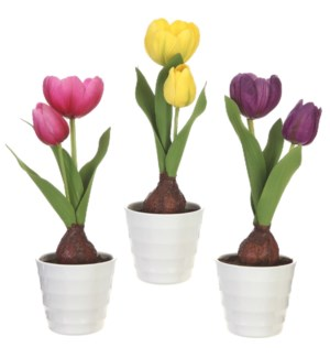 *SB* 10 Potted Real Touch Tulip Bulb