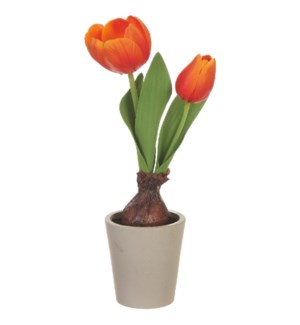 *SB* 10 Real Touch Potted Tulip Bulb