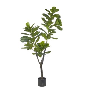 *DC* 6' Potted Fiddle Leaf Fig Tree