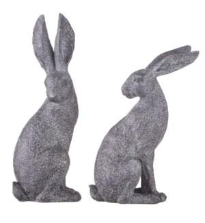 12.5 Sitting Rabbit