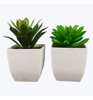 Artificial Succulents in White Pot, 2 Ast.