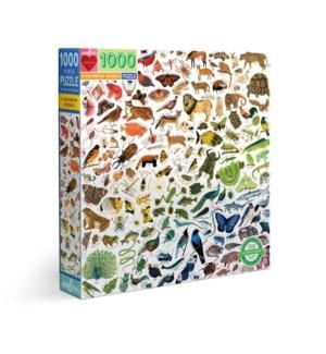 A Rainbow World 1000 Pc Sq Puzzle
