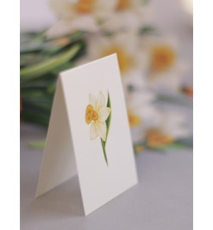 Daffodils (36 Flowers with Envelope)