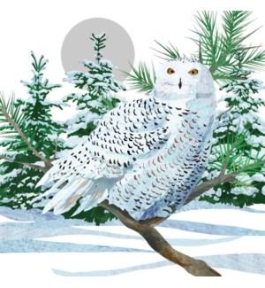 $BEV- SNOW OWL