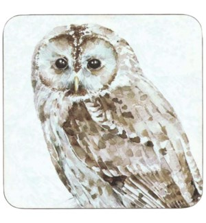 Barred Owl Coaster Set 4