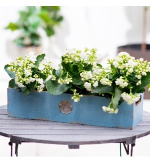 WD. PLANTER BLUE