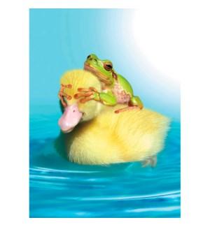BD/Duck Duck Frog