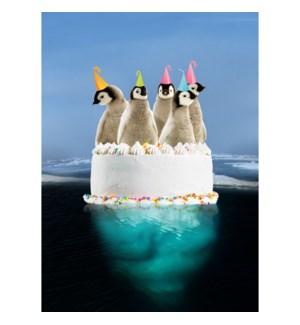 BD/Penguin Cake
