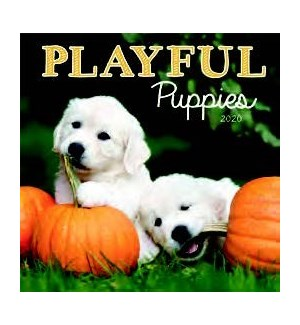 MINICAL/Playful Puppies
