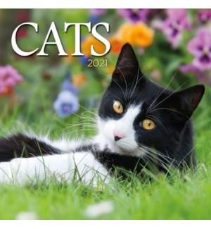 PHTWCAL/Cats
