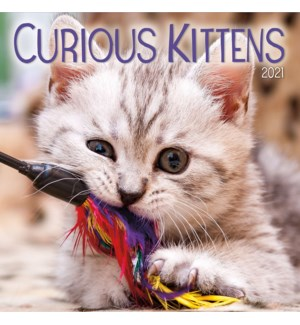 PHTWCAL/Curious Kittens