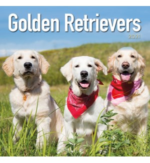 PHTWCAL/Golden Retrievers
