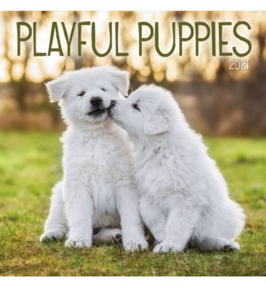 PHTWCAL/Playful Puppies