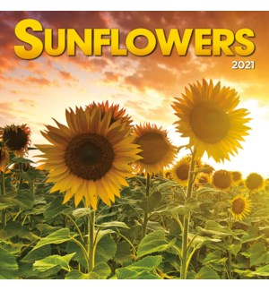 PHTWCAL/Sunflowers