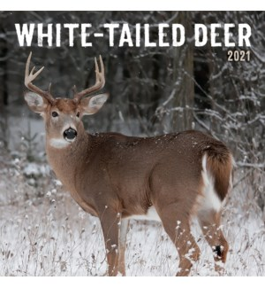 PHTWCAL/White Tailed Deer