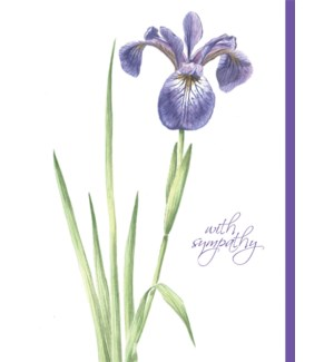 SY/Purple Lily