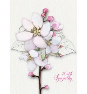 SY/Magnolia Sympathy