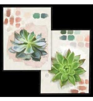 ABXNCARD/Succulent Study