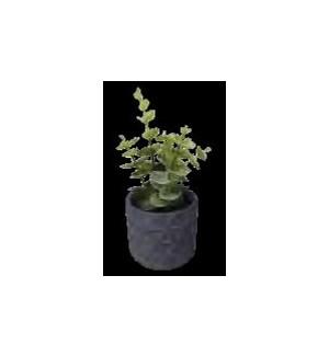 PLANT/Charcoal Faux Succulent
