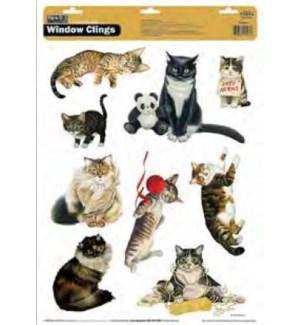 WNDWCLNG/American Cat