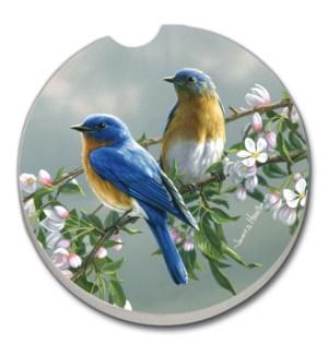 CARCSTR/Bulk Songbird Bluebird