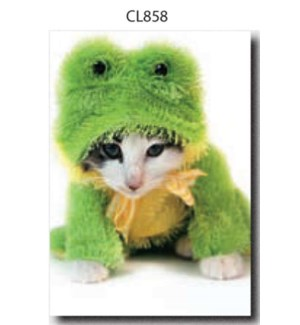 BL/Kitty Frog