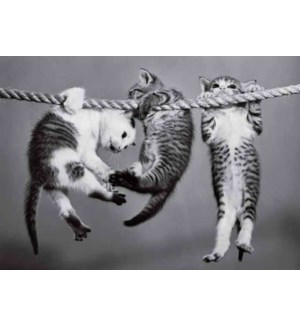 CO/Kittens On A Rope
