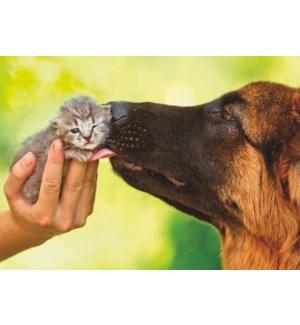 GW/Dog Licking Kitten