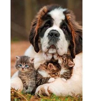 BL/Saint Bernard And Kittens