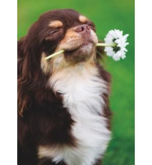 FR/Dog With Flower