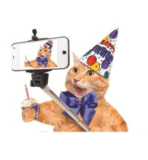 BD/ Cat taking Selfie