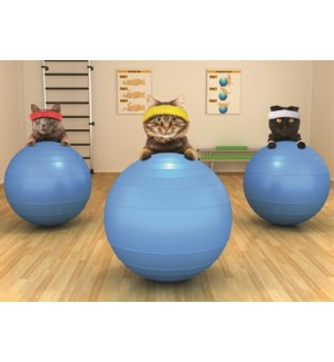 BD/ Cats with exercise balls