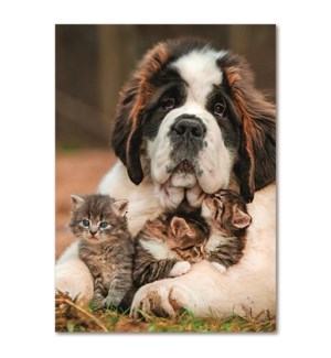 BL/Saint Bernard And Kittens