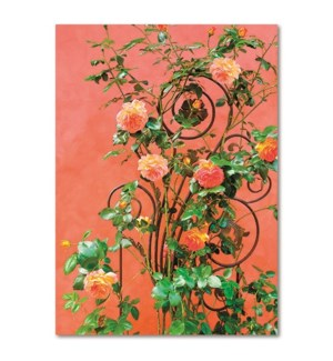 BL/Climbing Roses
