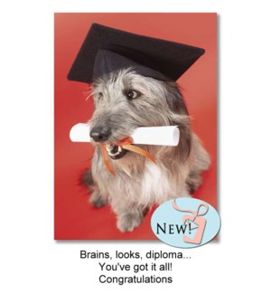 GR/Brains, Looks, Diploma...